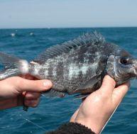 Agenda du pêcheur : quand pêcher quel poisson
