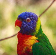 Loisirs : 5 zoos de France à visiter absolument !