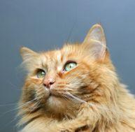 Demandez conseil à votre vétérinaire si vous observez des symptômes
