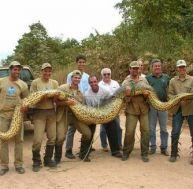 Les anacondas et les Hommes