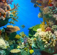 Concevoir un aquarium de rêve pour ses poissons