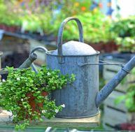 Arrosez votre jardin sans gaspiller