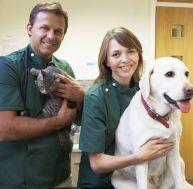 Assurance animaux: qu'est-ce qui est remboursé?