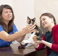 Choisir une assurance pour son chat