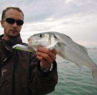 La pêche du bar au leurre de surface
