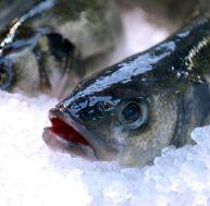 Principaux poissons d'eau de mer