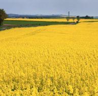 Que penser des biocarburants ?