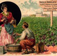 La bouillie bordelaise, un remède très ancien