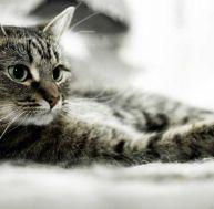 Le chat de maison