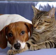 La cohabitation entre un chien et un chat