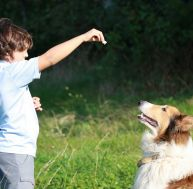 Les conseils pour dresser son chien