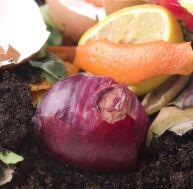 Le compost domestique