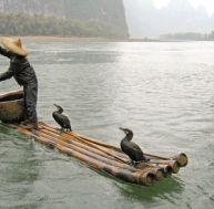 Les cormorans et les hommes