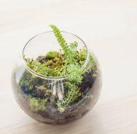 Comment créer un terrarium ?