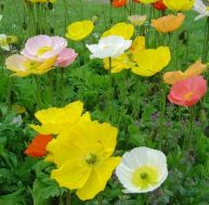 Créer des massifs de fleurs