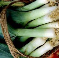 Cultiver des poireaux dans son jardin