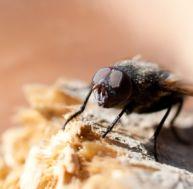 Se d barrasser des termites - Comment se debarrasser des mouche ...