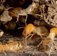 Se débarrasser des termites
