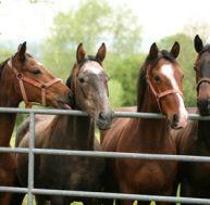 Devenir éleveur de chevaux
