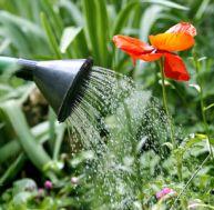 Les écogestes à appliquer au jardin