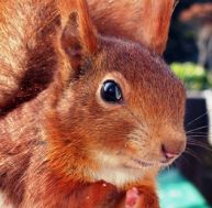 …malin comme un écureuil