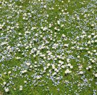Rénover une pelouse