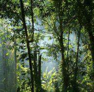 La fatigue et les plantes