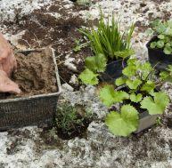Que faire au jardin entre mars et avril ?
