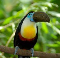La sauvegarde de la biodiversité