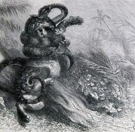 Combat d'un anaconda avec un jaguar