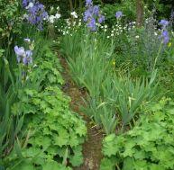 Quelles plantes cultiver dans un jardin à l'ombre
