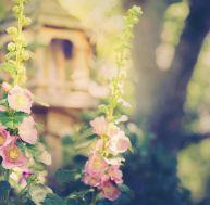 Voir la vie en rose dans son jardin...
