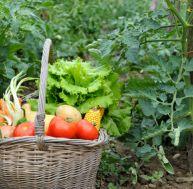 Comment jardiner écologique ?