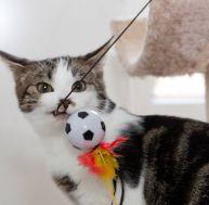 Choisir un jouet pour son chat