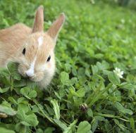 Petites histoires sur le lapin