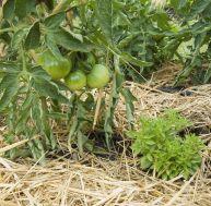 Que faire au jardin entre mai et juin ?