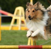 Connaître le métier de maître chien