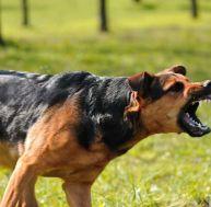 Les maladies du chien : la rage