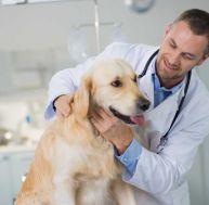 Les maladies du chien : le tétanos