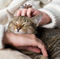 Maladies transmises par les animaux domestiques
