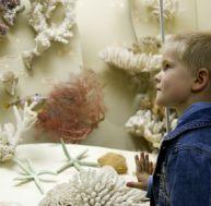 Les musées développent la curiosité de vos enfants