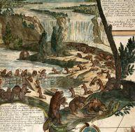 Gravure illustrant la vision qu'eurent les premiers voyageurs: les Amériques, la terre des castors