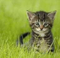 snoopybabe le nouveau chat star qui gouverne le web. Black Bedroom Furniture Sets. Home Design Ideas