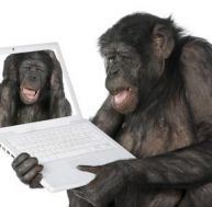 www.pratique.fr/chimpanzé