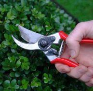 Les outils de taille au jardin