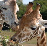 Les plus beaux zoos et parcs autour de Paris