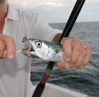 La pêche du maquereau