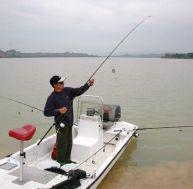 La pêche du silure aux pellets