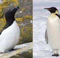 pi/pingouin-manchot-0.jpg
