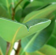 Entretien de vos plantes d'intérieur